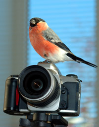 Digitálne fotografovanie a Vianoce