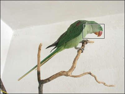image006.jpg (11526 bytes)