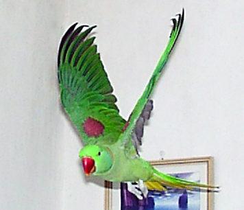 Digitálna fotografia - ilustračná fotka